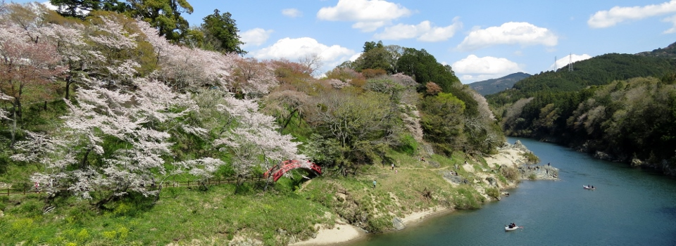 Beautiful Shinshiro Sakurabuchi Park during cherry blossom viewing season.